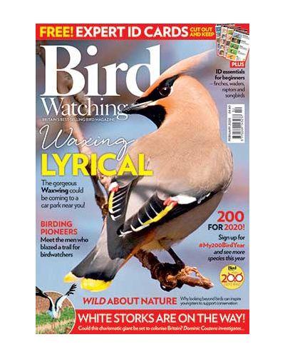 Bird Watching February 2020