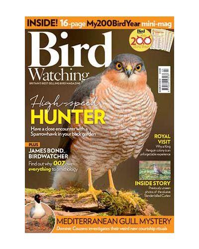 Bird Watching March 2020