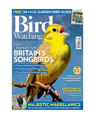 Bird Watching April 2020