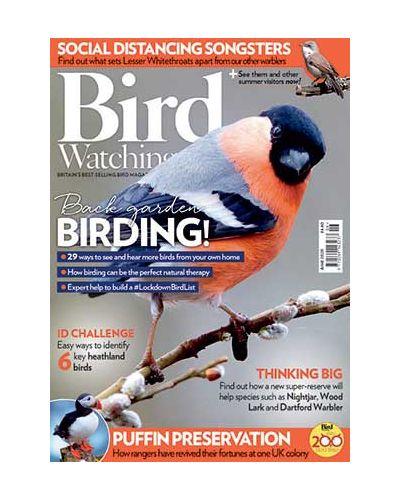 Bird Watching June 2020