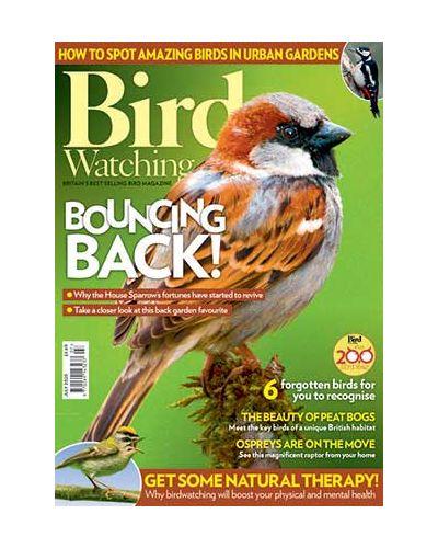Bird Watching July 2020