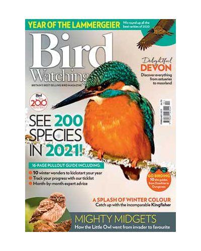 Bird Watching February 2021