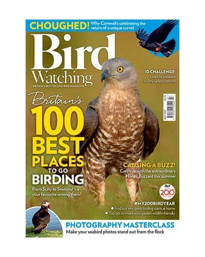 Bird Watching July 2021