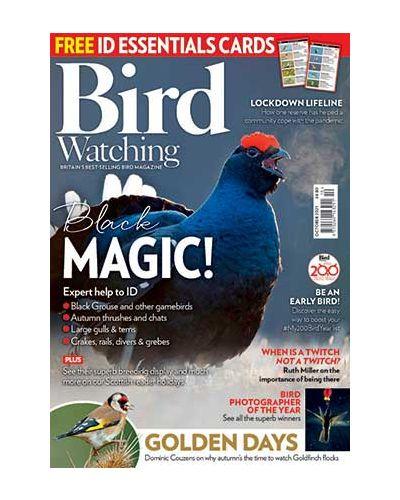 Bird Watching October 2021
