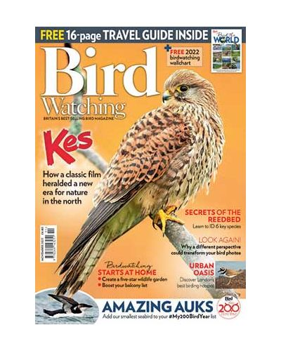 Bird Watching November 2021