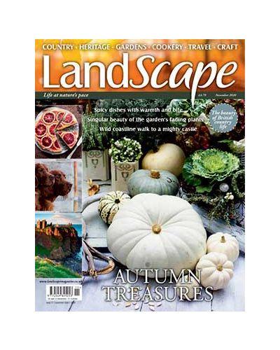 LandScape November 2020
