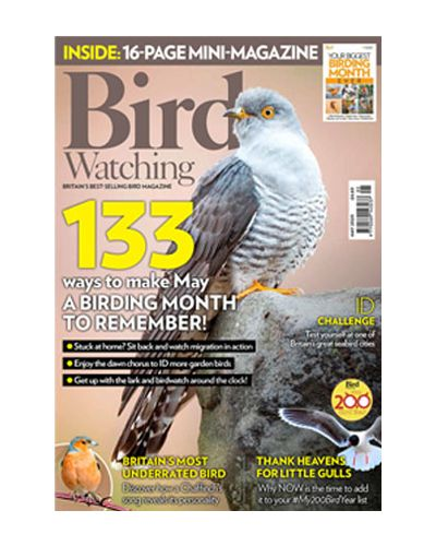 Bird Watching May 2020