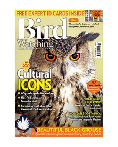 Bird Watching October 2020