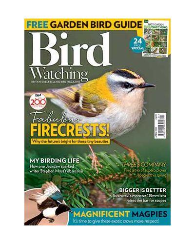 Bird Watching April 2021